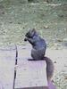 Demonic Black Squirrels Swarm Canada--thumbnail image